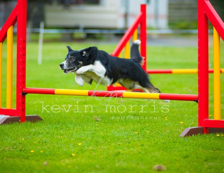 Flyball ireland